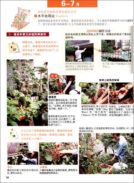 美味花园:打造蔬菜主题花园