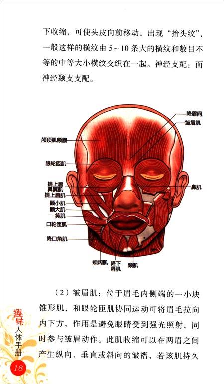 趣味人体手册