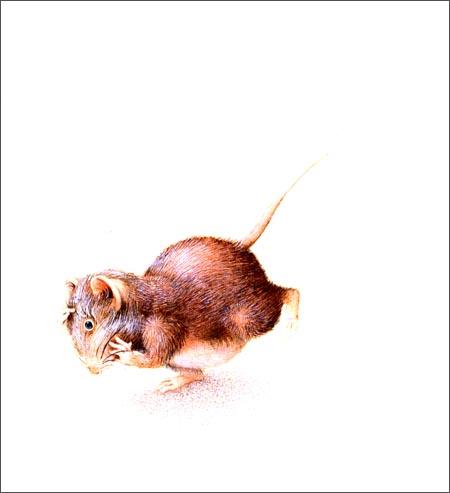 小老鼠无字书:飞机精装–2013年4月1日