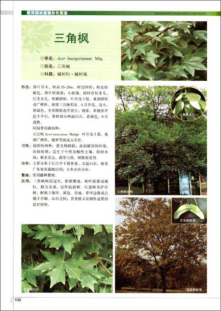 常用园林植物彩色图鉴/何礼华