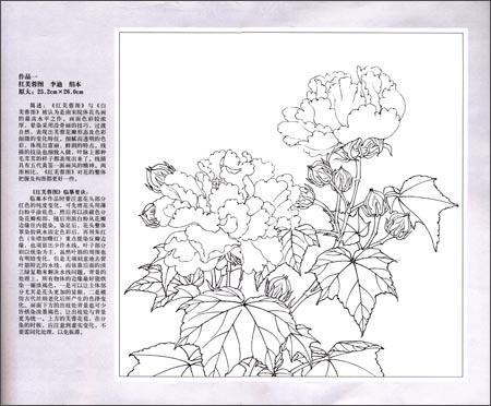 实用白描画稿 宋人花卉小品 李晓明 图书 亚马