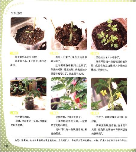 阳台种出有机菜