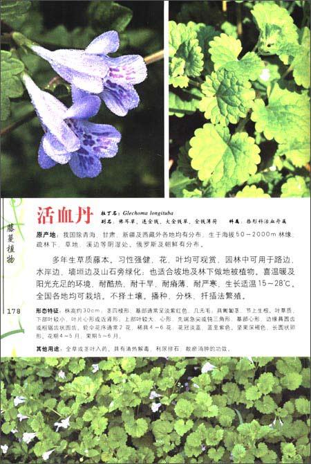 园林植物彩色图鉴:水生藤蔓植物:亚马逊:图书