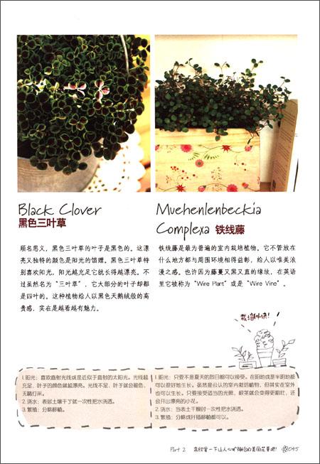 阳台种花:一学即会的花草栽培法
