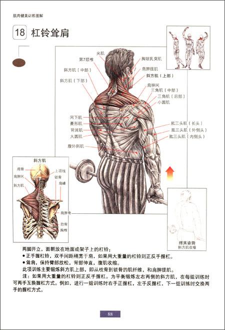 肌肉健美训练图解