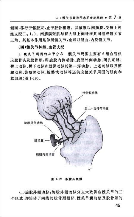 人工髋关节置换术后康复