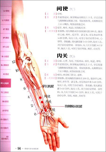 经络穴位标准图册