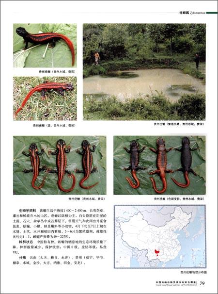 中国两栖动物及其分布彩色图鉴