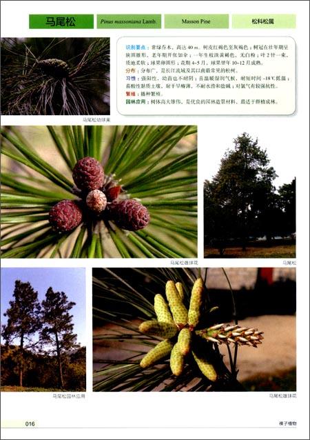 《景观园林植物图鉴》