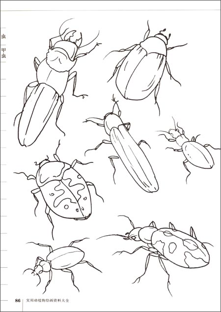 实用动植物绘画资料大全 鱼虫爬行类
