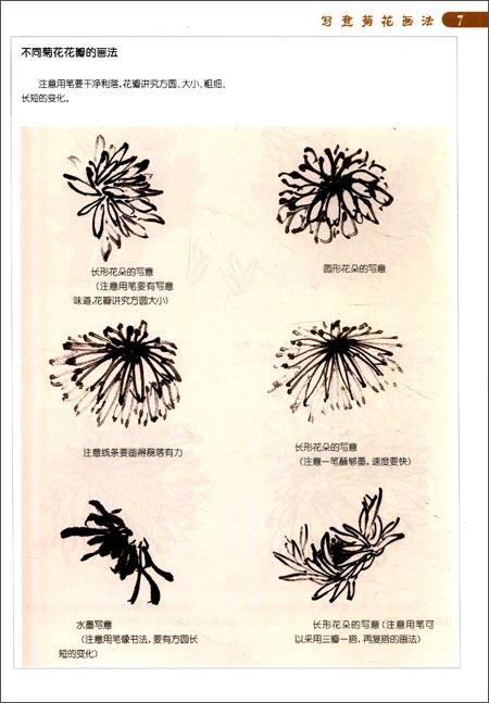 中国画画法入门丛书:写意菊花画法:亚马逊:图书