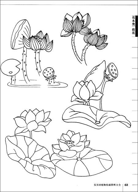 实用动植物绘画资料大全 植物篇