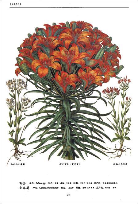世界大师手绘经典:花卉之书