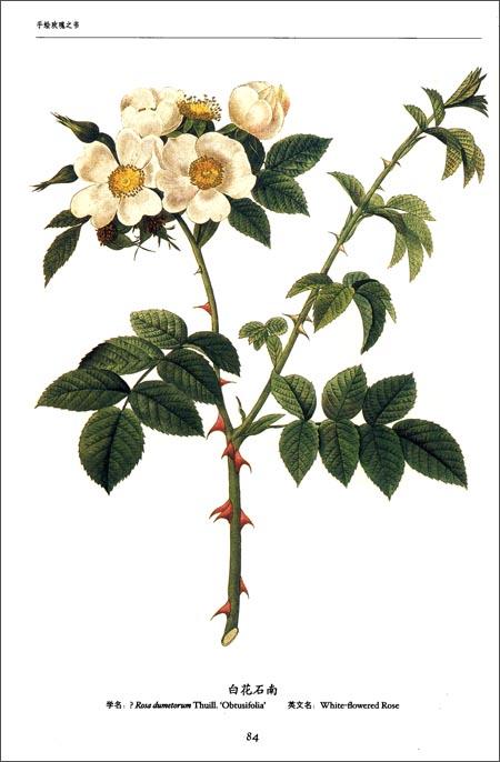 世界大师手绘经典:玫瑰之书