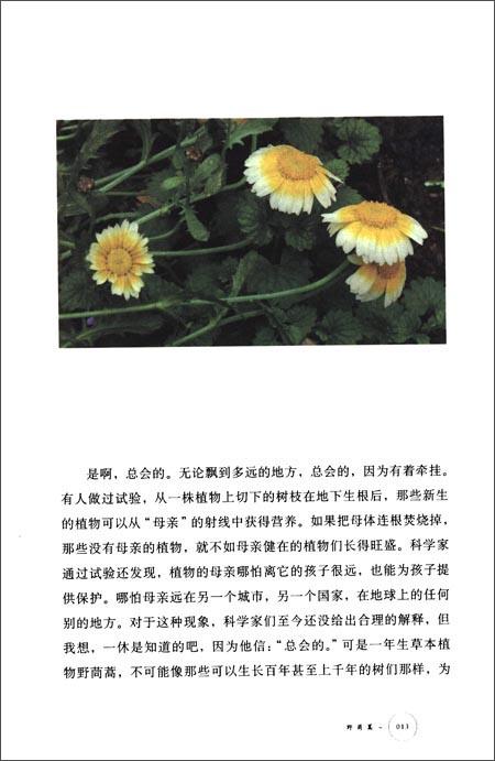 植物记:海南篇