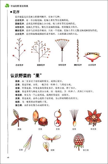 第1图典•从入门到精通:中国的野菜轻图典