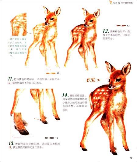 动物绘 38种可爱动物的色铅笔图绘