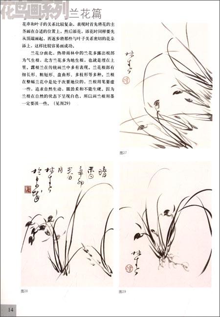 简易手绘兰花插图