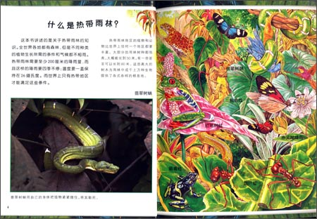 回至 可怕的动物:雨林动物 (平装)