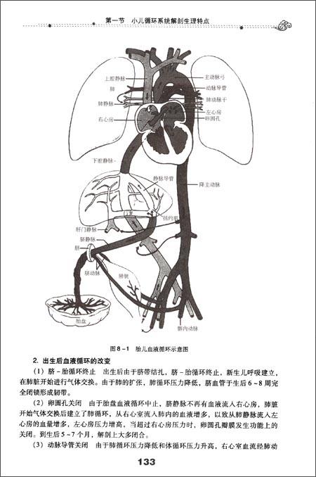 手绘心脏医学解剖图