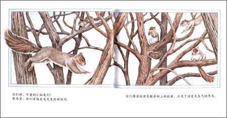 亲近自然奇妙的小动物:快乐的松鼠:亚马逊:图书