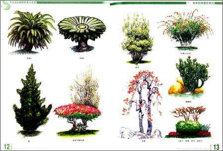 手绘园林植物配置与造景
