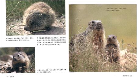 法国经典儿童科普61野生动物面对面:土拨鼠:亚马逊