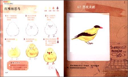 笔记大自然-手绘水彩动物志 -nanajoe (新博)
