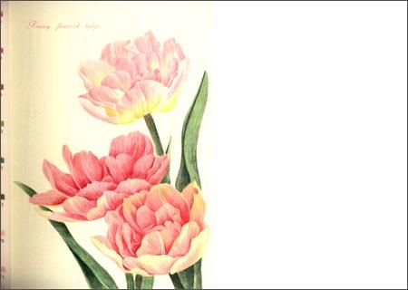 花之绘明信片组 飞乐鸟 中国水利水电出版社 素描 速写 技法 教程 绘