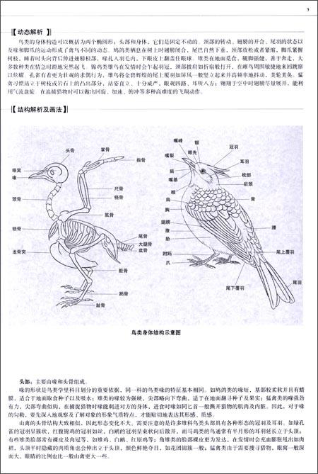 插图:                    鸟类是由古爬行类动物