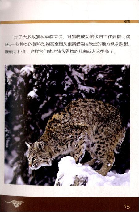 自然之灵:猫科动物+蛇与爬行动物+甲虫与昆虫