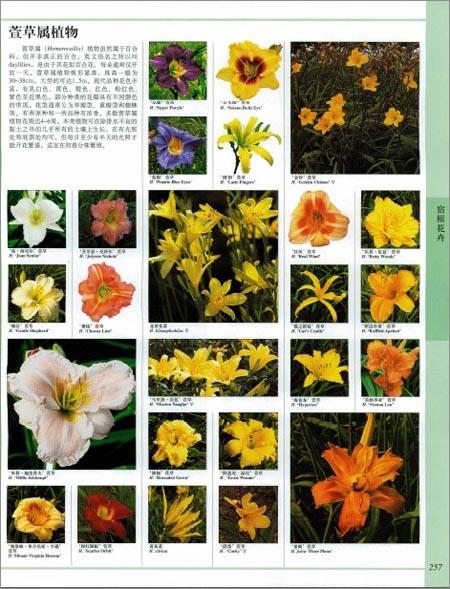 DK世界园林植物与花卉百科全书