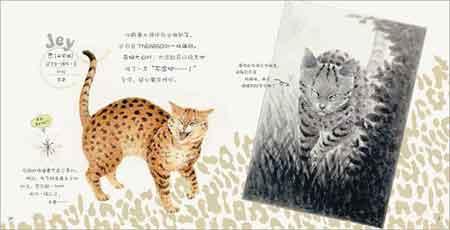 乐活猫城:猫国物语