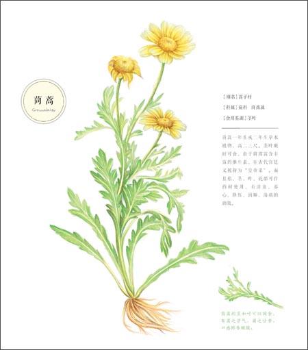 植物花朵黑白铅笔