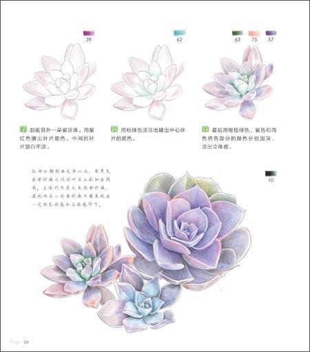 多肉绘-38种多肉植物的色铅笔图绘 -飞乐鸟 (新博)