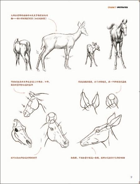 完美手绘课堂:动物画表现技法/林端
