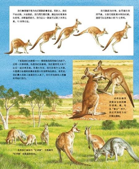 动物王国大探秘