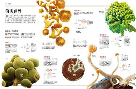 玉米叶脉的结构图解