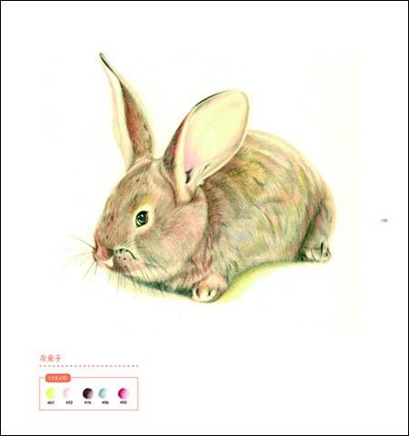 泰迪素描画法步骤图片