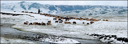 中国国家地理:游牧时光
