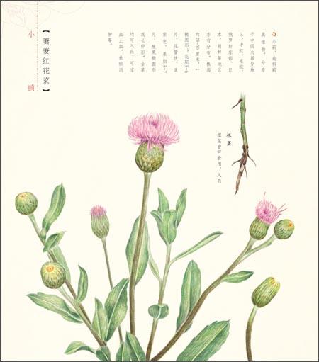 大暑花草水墨图-花之绘2 二十四节气花卉的色铅笔图绘