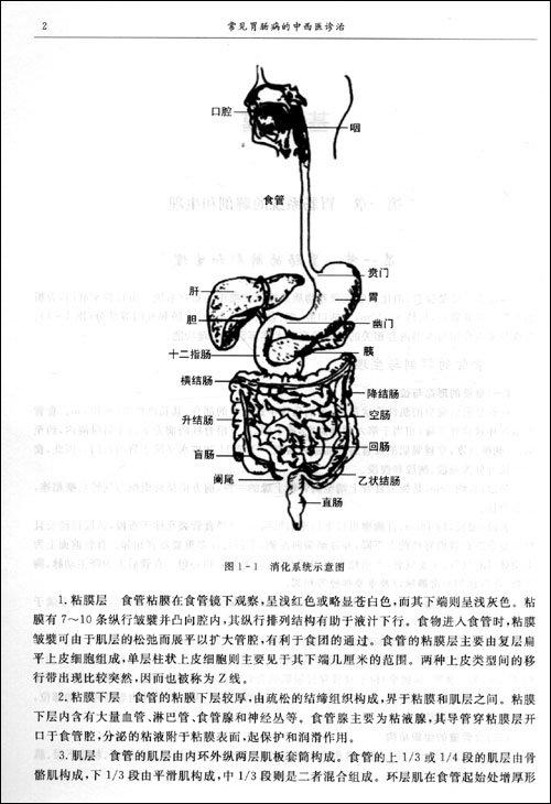 胃底与膈,脾相贴.苏教版小雪花音乐教学设计图片