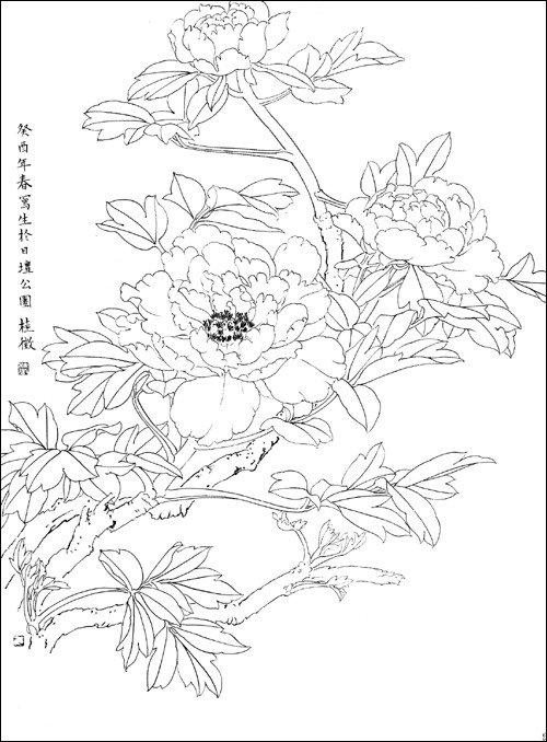 凤凰白描图图片素材大全,古风白描图片,白描龙图片大全,黑白花线描.