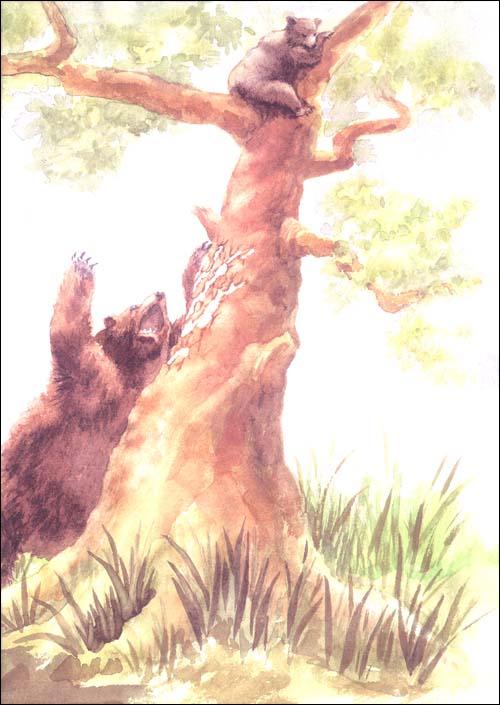 西顿动物记1-5