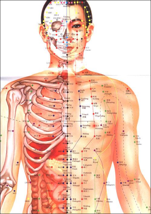 中医针灸经络视频_为什么中医针灸的穴位图都是以男性为标准?