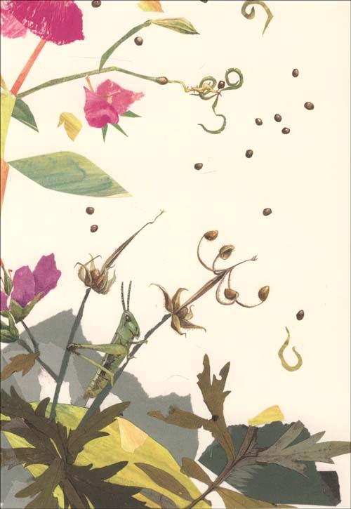 一粒种子的旅行