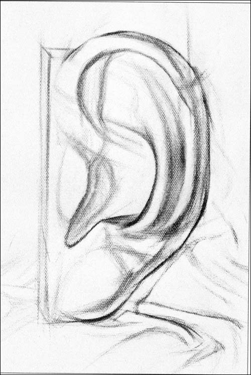 结构素描入门挂图:石膏五官训练基础篇:亚马逊:图书