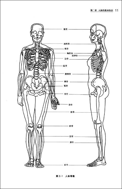 这种时装画除人体着装效果图外,还要求画出正,背两面款式图,裁剪图和