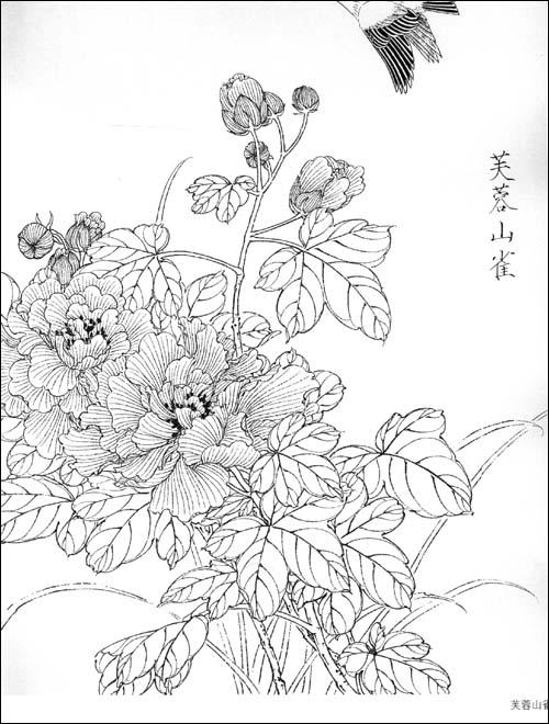 工笔画白描教学示范61花鸟画稿:亚马逊:图书