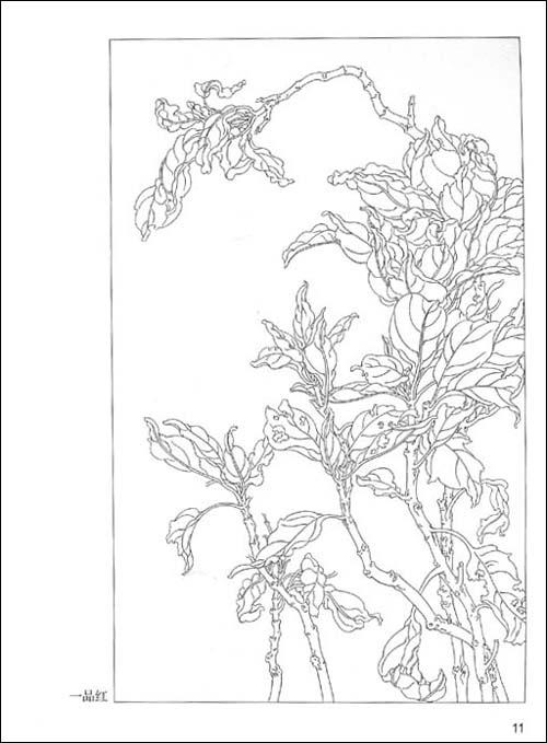 樱树铅笔画